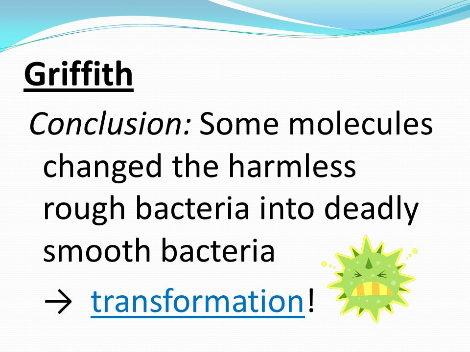 Griffith Conclusion: Some molecules changed the harmless rough bacteria into deadly smooth bacteria transformation!