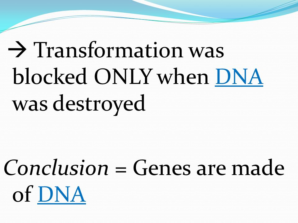 Transformation was blocked ONLY when DNA was destroyed Conclusion = Genes are made of DNA