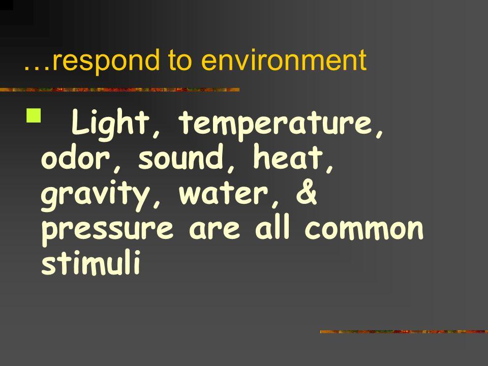 …respond to environment Light, temperature, odor, sound, heat, gravity, water, & pressure are all common stimuli