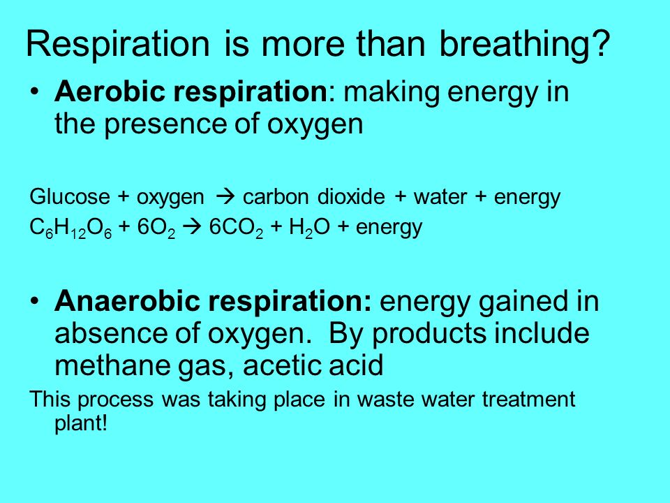 Respiration is more than breathing? Aerobic respiration: making energy in the presence of oxygen Glucose + oxygen carbon dioxide + water + energy C 6