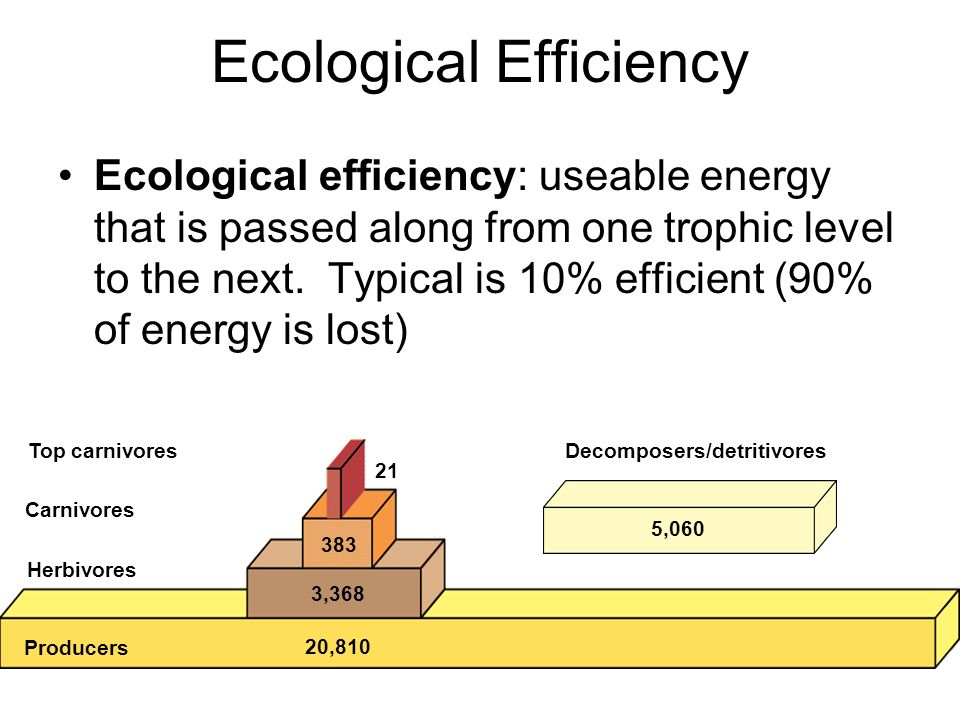 Ecological Efficiency Ecological efficiency: useable energy that is passed along from one trophic level to the next. Typical is 10% efficient (90% of