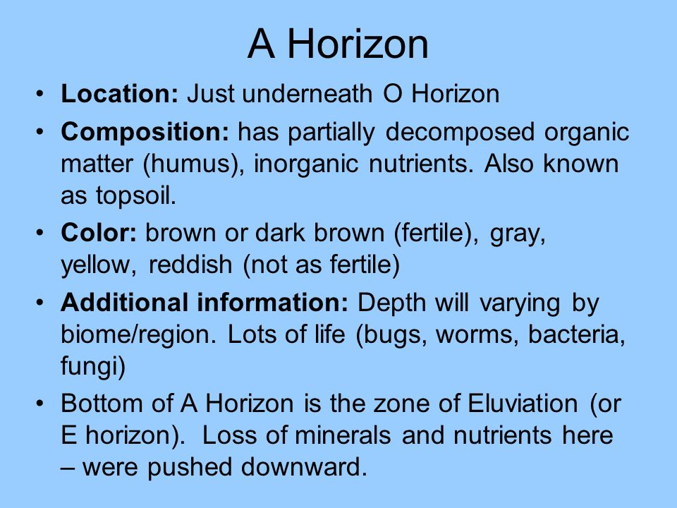 A Horizon Location: Just underneath O Horizon Composition: has partially decomposed organic matter (humus), inorganic nutrients. Also known as topsoil