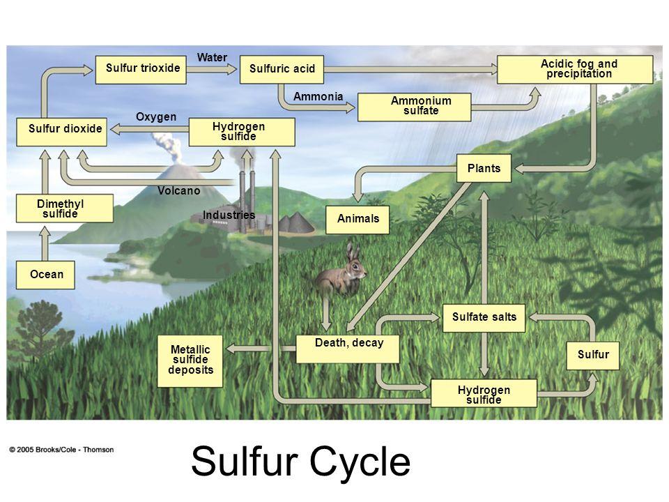 Sulfur Cycle Sulfur Hydrogen sulfide Sulfate salts Plants Acidic fog and precipitation Ammonium sulfate Animals Death, decay Metallic sulfide deposits