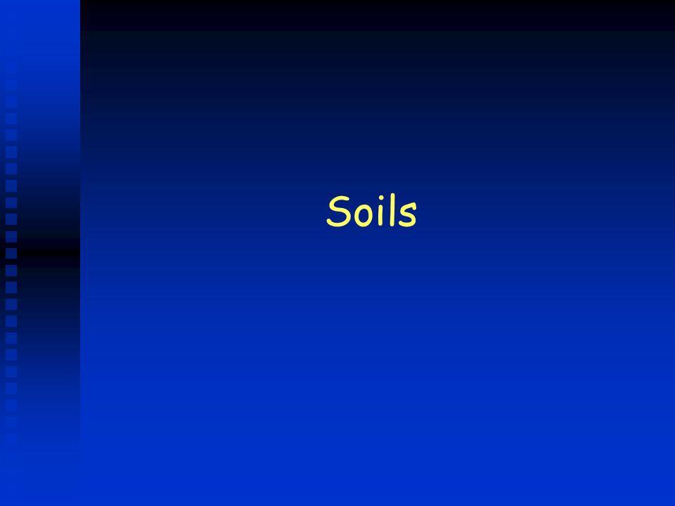 B horizon n Subsoil n Clay and many minerals u Iron u Aluminum u Calcium n Leached from layers above