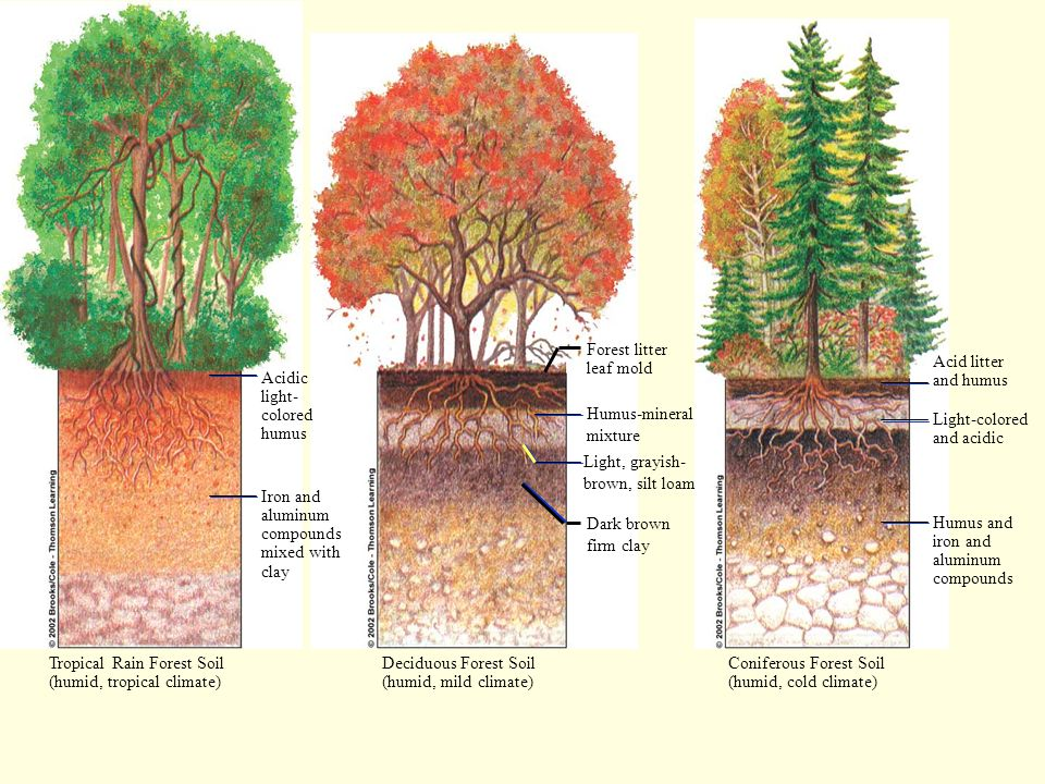 Acidic light- colored humus Iron and aluminum compounds mixed with clay Forest litter leaf mold Humus-mineral mixture Light, grayish- brown, silt loam