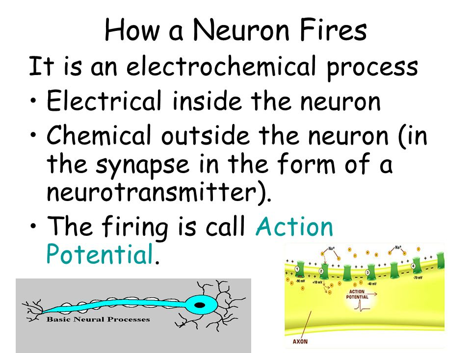 Neurotransmitters Chemical messengers released by terminal buttons through the synapse.