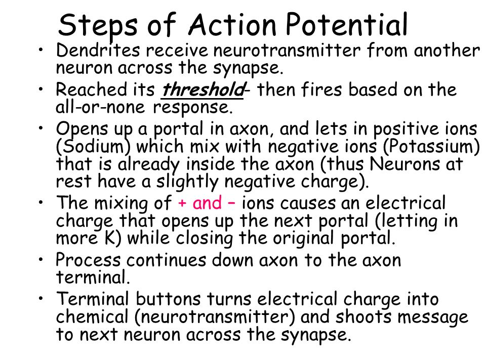 Steps of Action Potential Dendrites receive neurotransmitter from another neuron across the synapse.