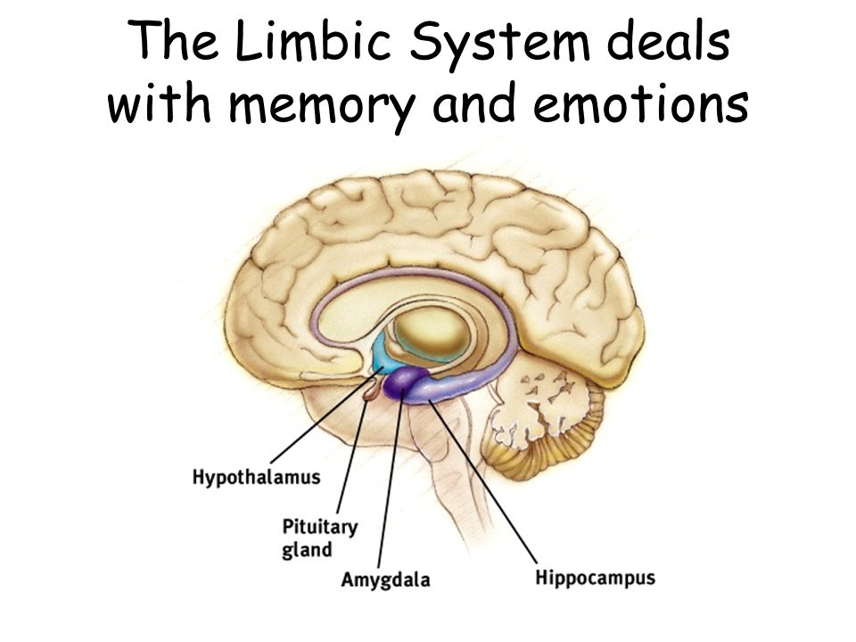 The Limbic System deals with memory and emotions