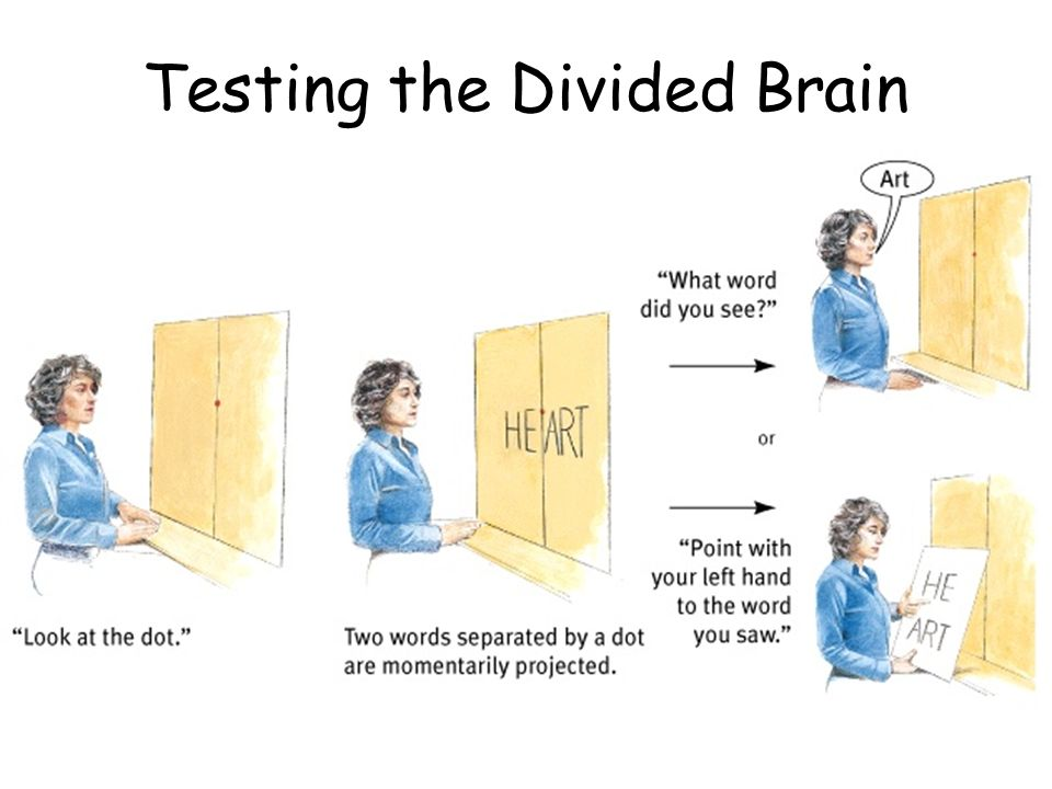 Testing the Divided Brain