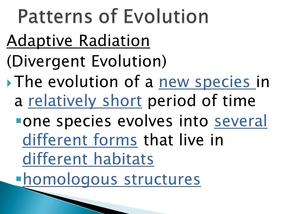 Adaptive Radiation (Divergent Evolution) The evolution of a new species in a relatively short period of time one species evolves into several differen