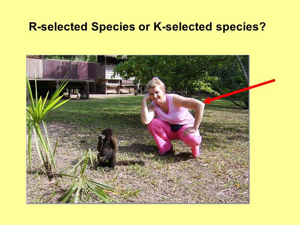 R-selected Species or K-selected species?