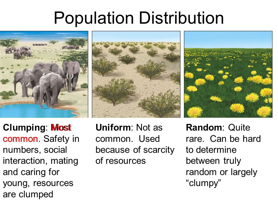 Population Distribution Clumping: Most common.