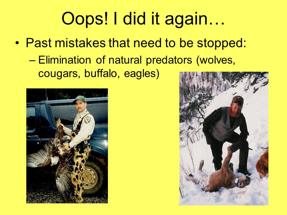 Oops! I did it again… Past mistakes that need to be stopped: –Elimination of natural predators (wolves, cougars, buffalo, eagles)