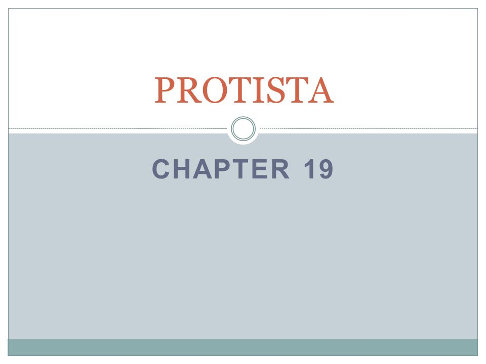 CHAPTER 19 PROTISTA