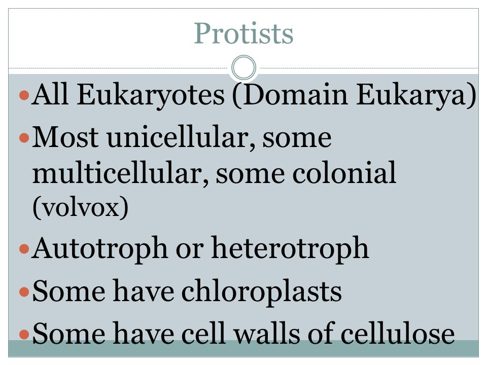 Protists All Eukaryotes (Domain Eukarya) Most unicellular, some multicellular, some colonial (volvox) Autotroph or heterotroph Some have chloroplasts