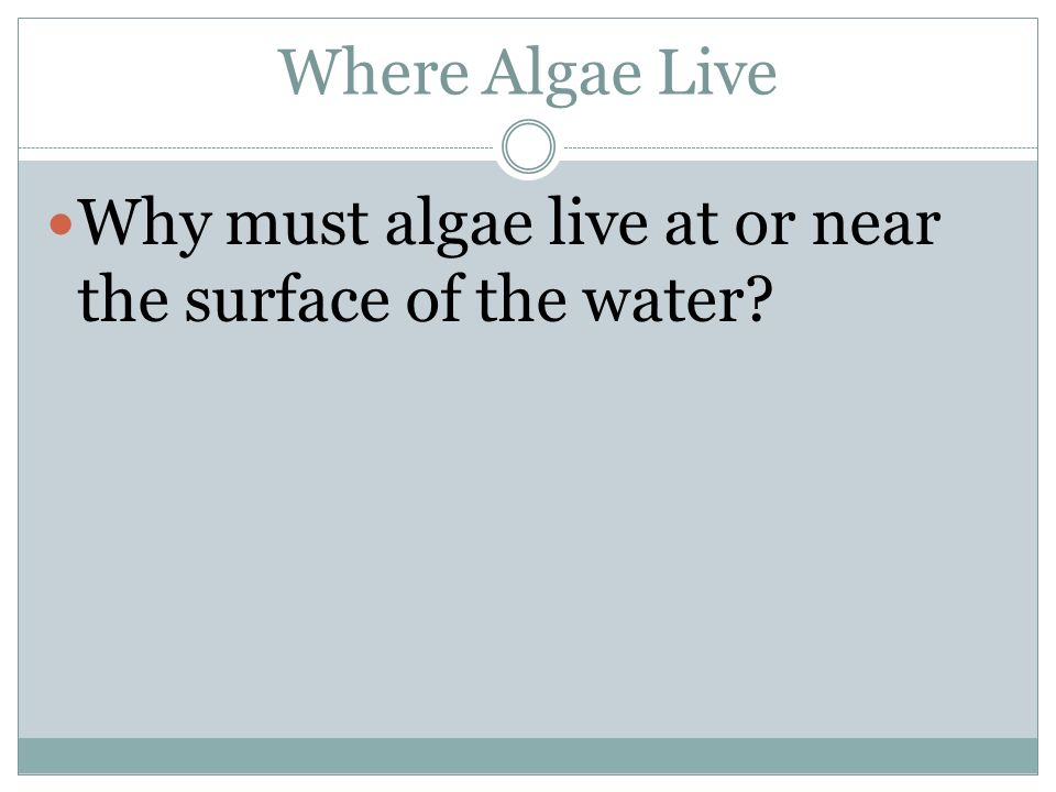 Where Algae Live Why must algae live at or near the surface of the water?