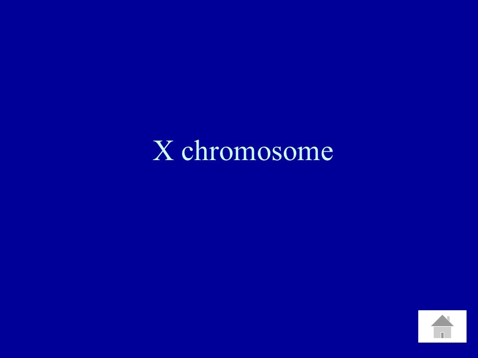What is Homozygous Recessive