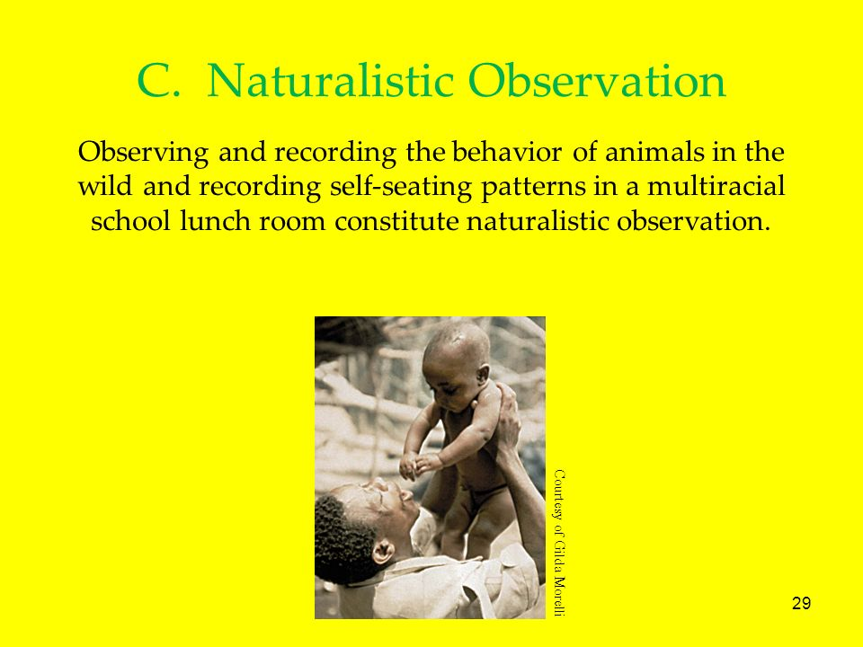29 C. Naturalistic Observation Observing and recording the behavior of animals in the wild and recording self-seating patterns in a multiracial school