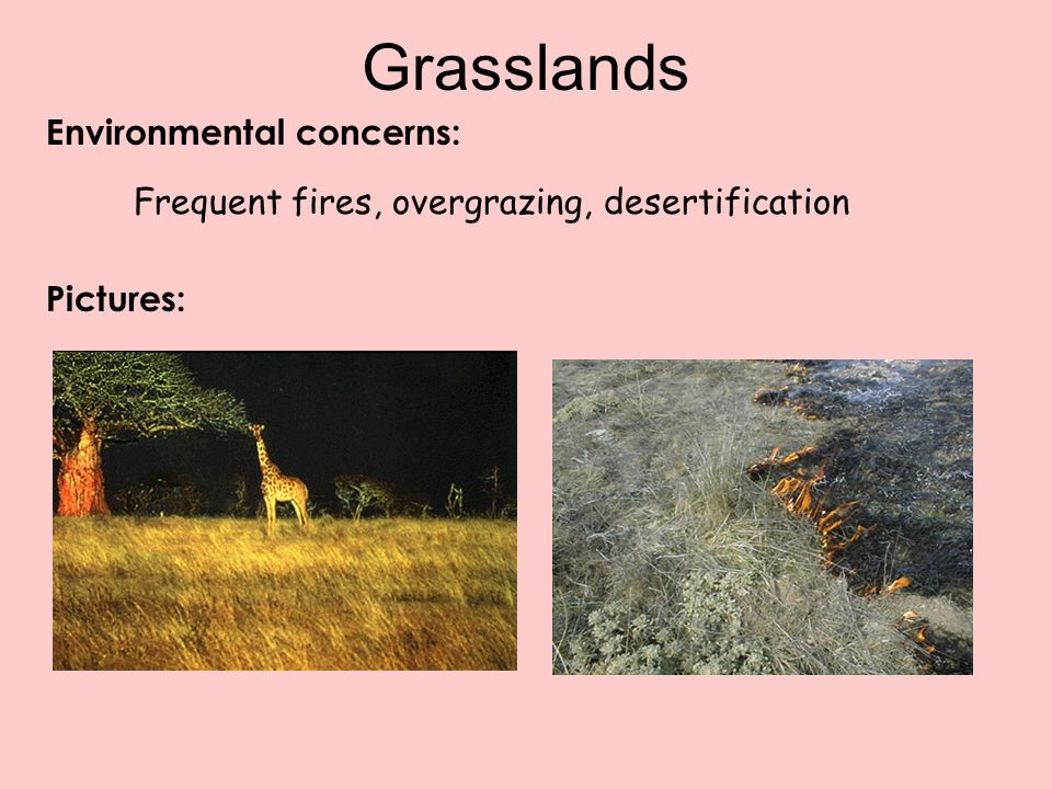 Environmental concerns: Grasslands Frequent fires, overgrazing, desertification Pictures: