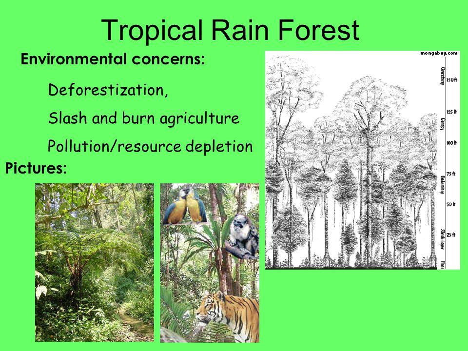 Environmental concerns: Tropical Rain Forest Deforestization, Slash and burn agriculture Pollution/resource depletion Pictures: