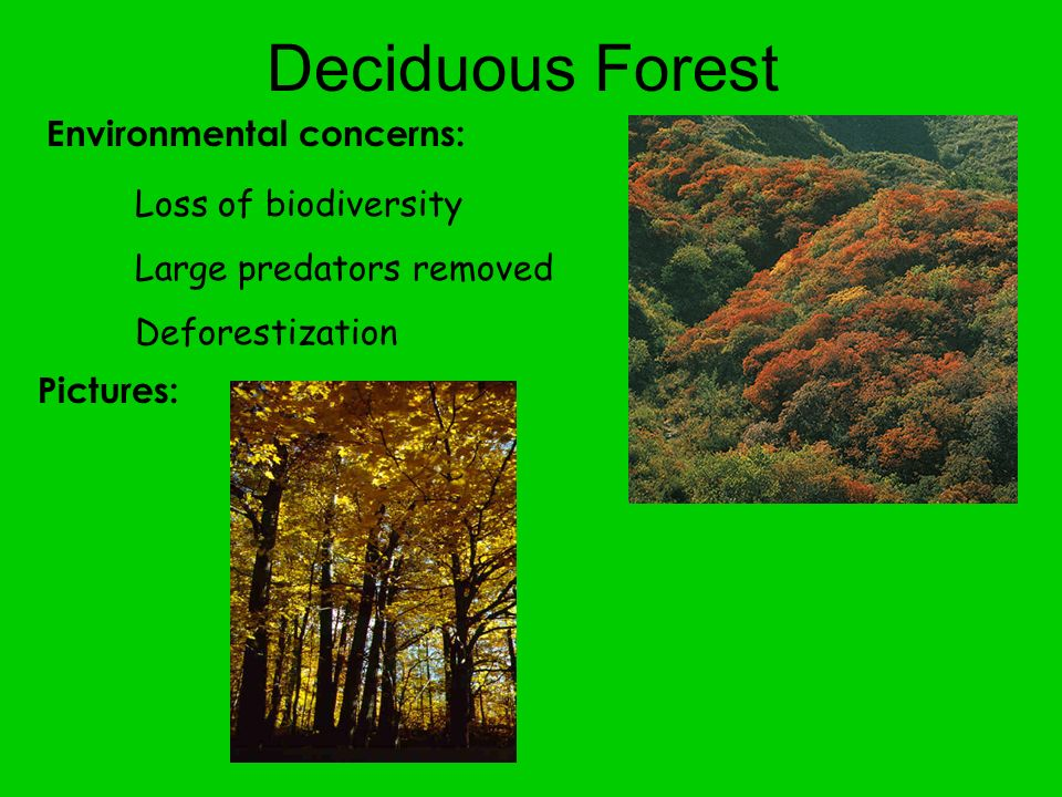 Environmental concerns: Deciduous Forest Loss of biodiversity Large predators removed Deforestization Pictures: