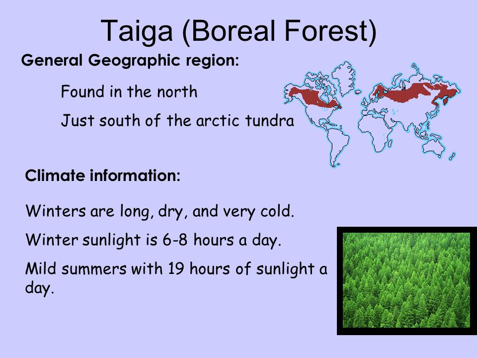 Taiga (Boreal Forest) General Geographic region: Climate information: Found in the north Just south of the arctic tundra Winters are long, dry, and very cold.