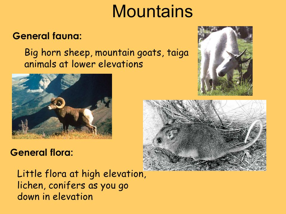 General fauna: General flora: Mountains Big horn sheep, mountain goats, taiga animals at lower elevations Little flora at high elevation, lichen, conifers as you go down in elevation