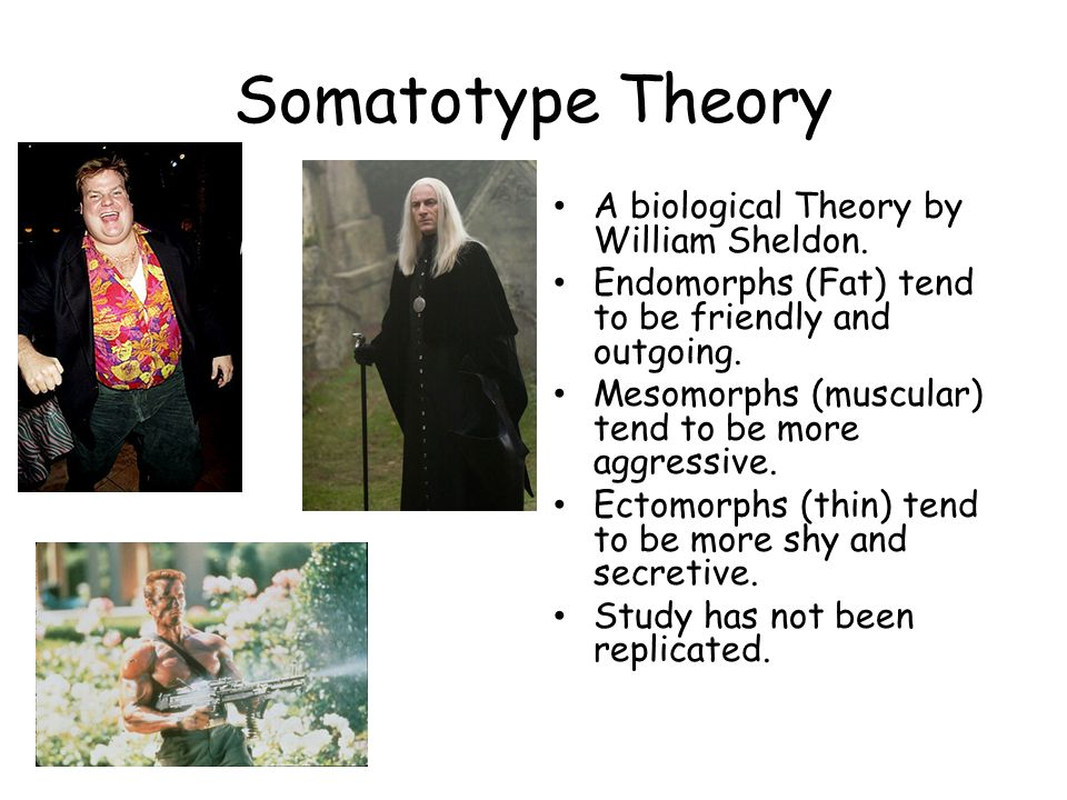 Somatotype Theory A biological Theory by William Sheldon. Endomorphs (Fat) tend to be friendly and outgoing. Mesomorphs (muscular) tend to be more agg