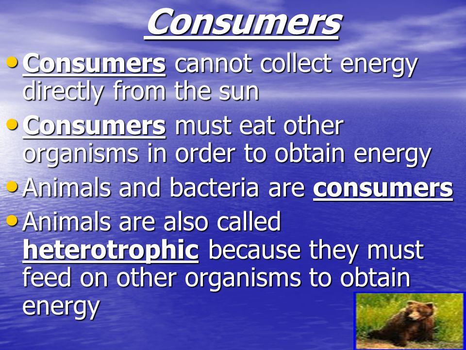 Consumers Consumers cannot collect energy directly from the sun Consumers cannot collect energy directly from the sun Consumers must eat other organis