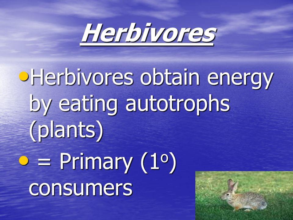 Herbivores Herbivores obtain energy by eating autotrophs (plants) Herbivores obtain energy by eating autotrophs (plants) = Primary (1 o ) consumers =
