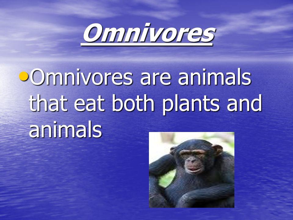 Omnivores Omnivores are animals that eat both plants and animals Omnivores are animals that eat both plants and animals