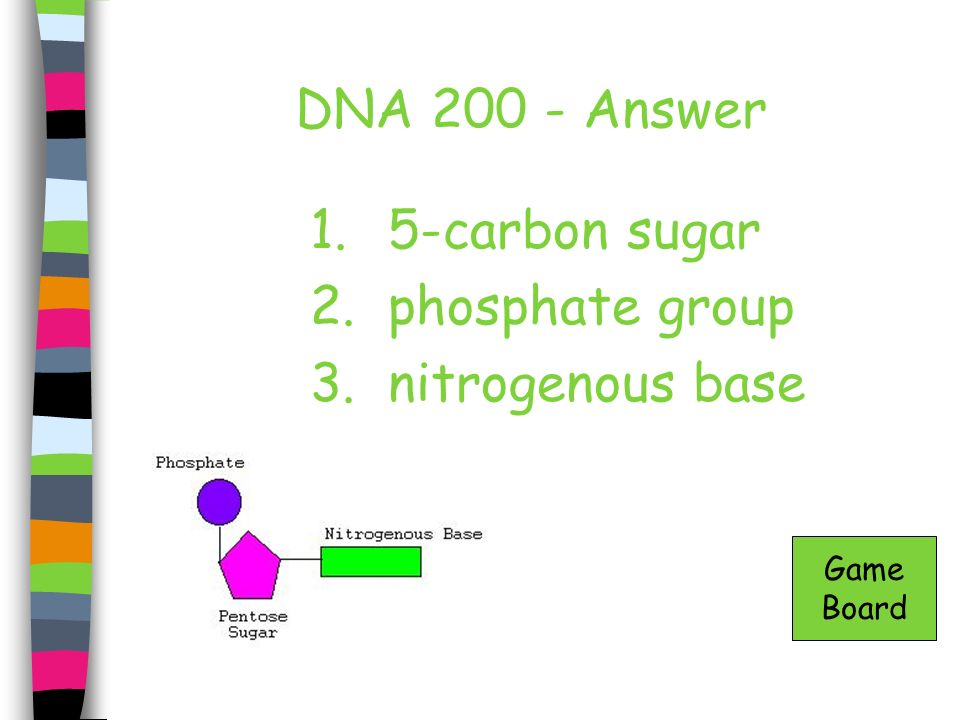 DNA 300- Answer In the nucleus Game Board