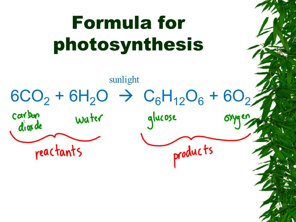 Formula for photosynthesis 6CO 2 + 6H 2 O C 6 H 12 O 6 + 6O 2 sunlight