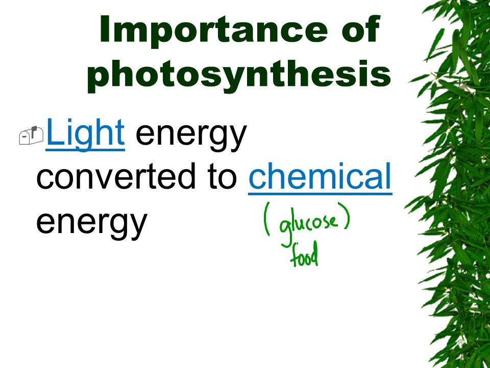 Importance of photosynthesis Light energy converted to chemical energy
