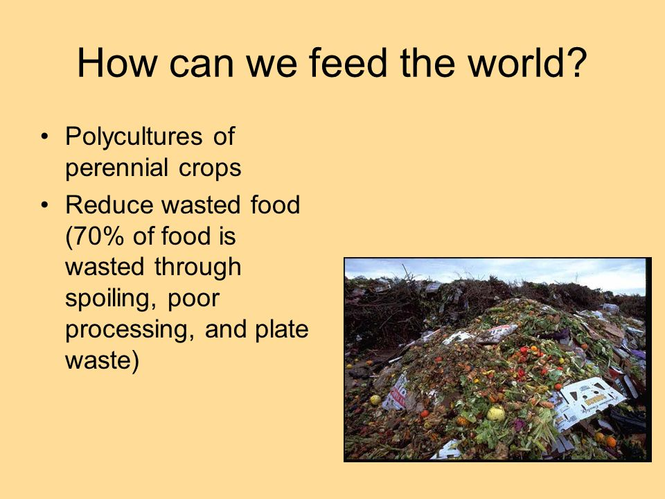 How can we feed the world? Polycultures of perennial crops Reduce wasted food (70% of food is wasted through spoiling, poor processing, and plate wast