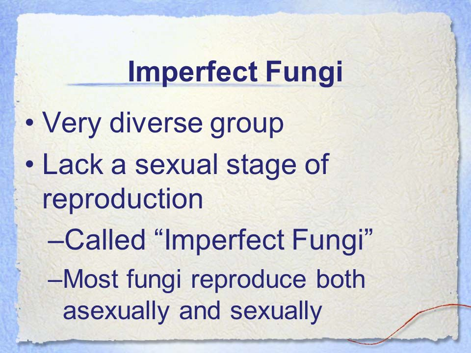 Imperfect Fungi Very diverse group Lack a sexual stage of reproduction –Called Imperfect Fungi –Most fungi reproduce both asexually and sexually