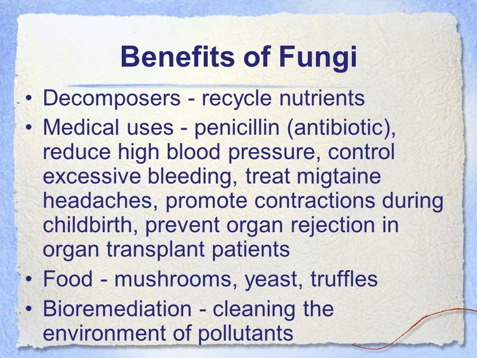 Benefits of Fungi Decomposers - recycle nutrients Medical uses - penicillin (antibiotic), reduce high blood pressure, control excessive bleeding, trea