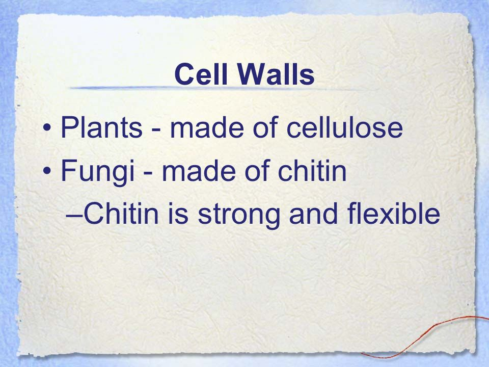 Cell Walls Plants - made of cellulose Fungi - made of chitin –Chitin is strong and flexible