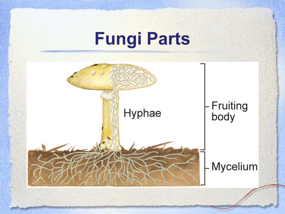 Fungi Parts