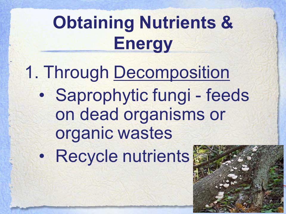 Obtaining Nutrients & Energy 2.