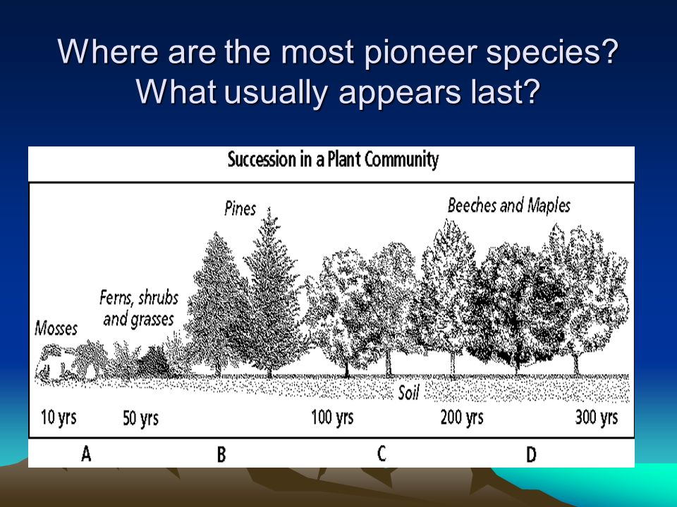 Where are the most pioneer species? What usually appears last?