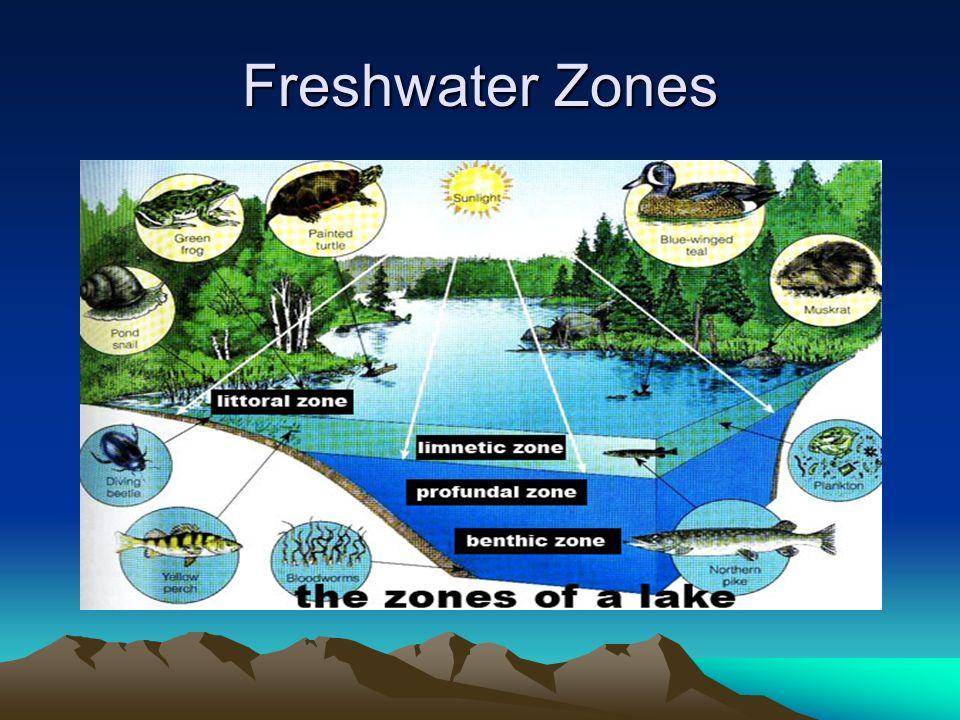 Freshwater Zones