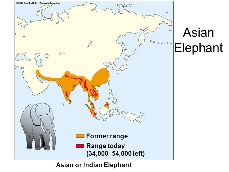 Figure 12-7d Page 232 Asian or Indian Elephant Former range Range today (34,000–54,000 left) Asian Elephant
