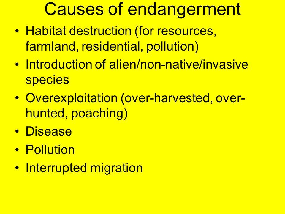 Causes of endangerment Habitat destruction (for resources, farmland, residential, pollution) Introduction of alien/non-native/invasive species Overexp
