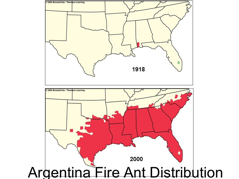1918 2000 Argentina Fire Ant Distribution