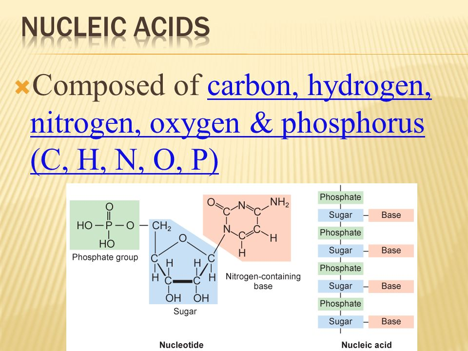 Composed of carbon, hydrogen, nitrogen, oxygen & phosphorus (C, H, N, O, P)