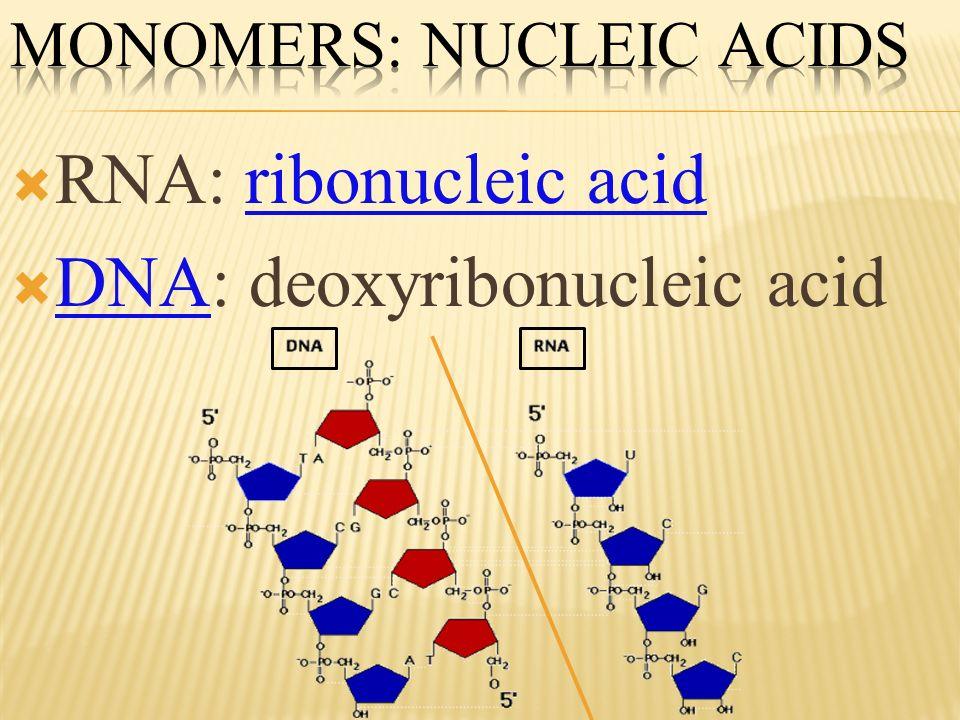RNA: ribonucleic acid DNA: deoxyribonucleic acid