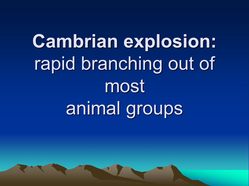 Cambrian explosion: rapid branching out of most animal groups