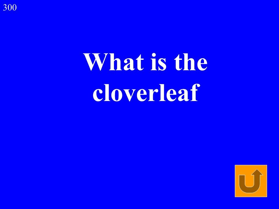 What is the cloverleaf 300