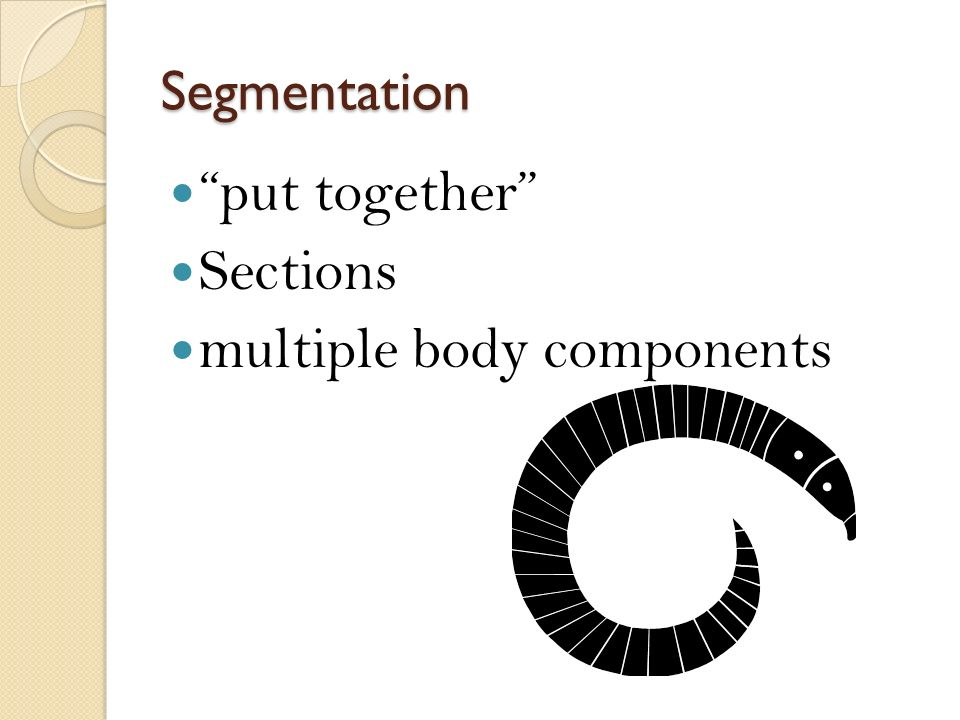 Segmentation put together Sections multiple body components